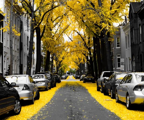 En Güzel Sokaklar