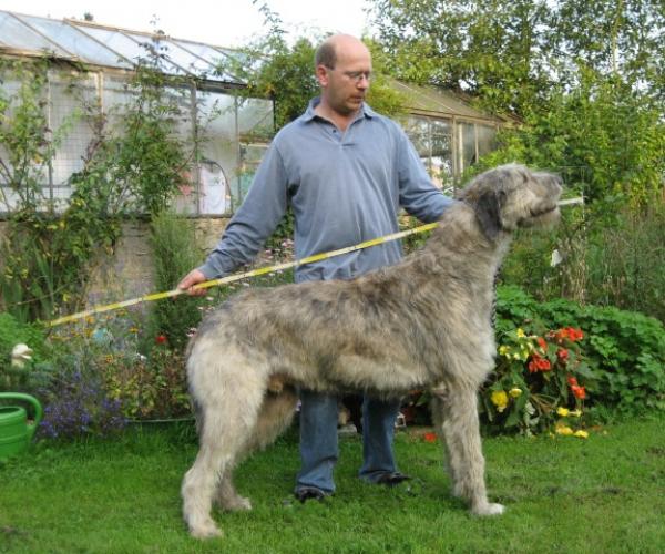 Dünyanın En Uzun Köpeği