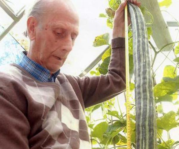 Dünyanın En Uzun Salatalığı