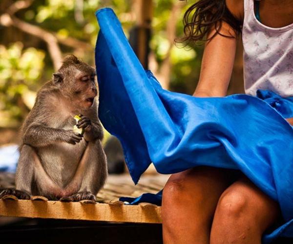 Eteği Açılan Kadın Ve Meraklı Şempanze