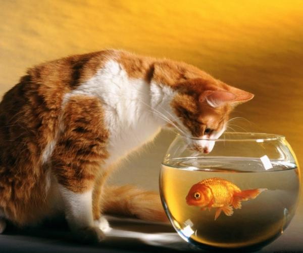 Kediler Neden Balık Ve Süt Sever?