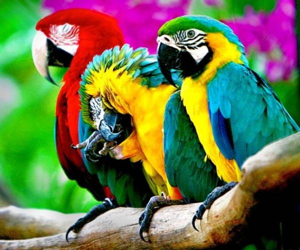 Kuşlar Nasıl Konuşur?